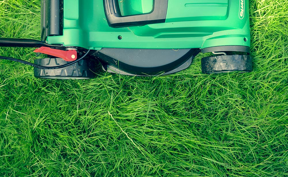 Maintain Your Lawn Without Wasting Water