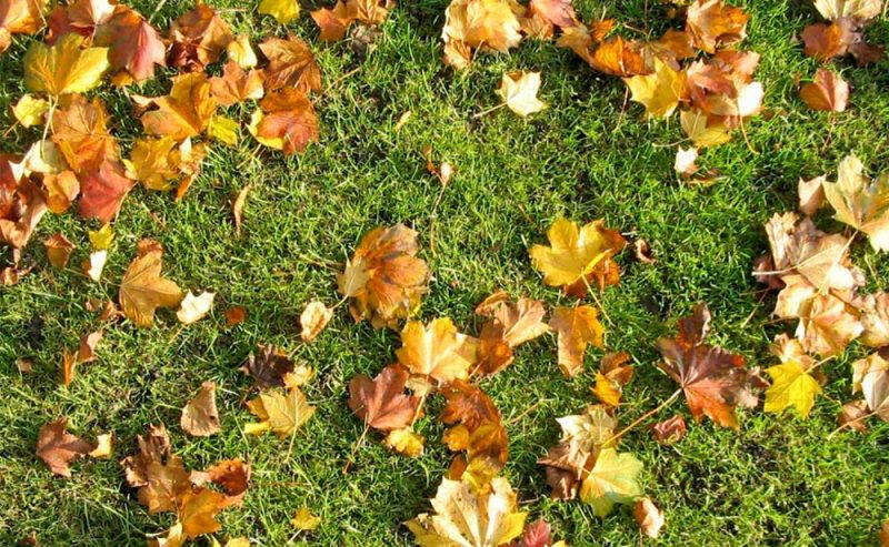 StayGreen Fall Lawn