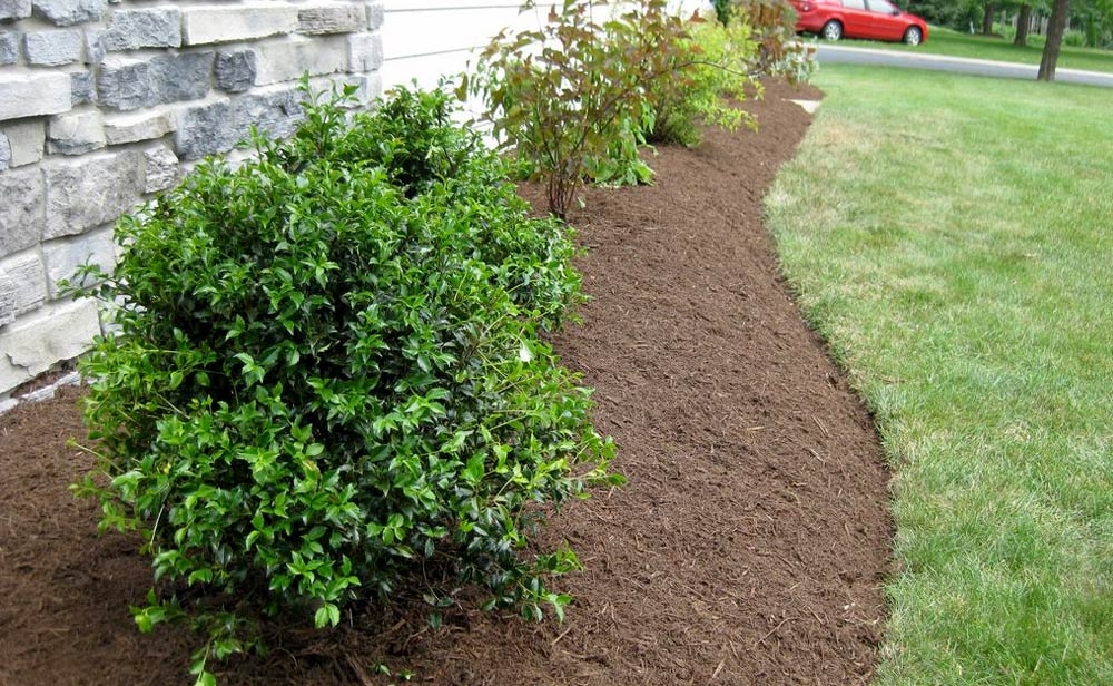 Side Yard Landscaping 2010