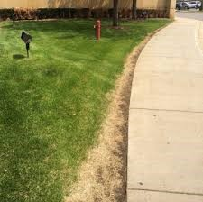 salt damage to lawn