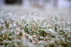 frost on the lawn