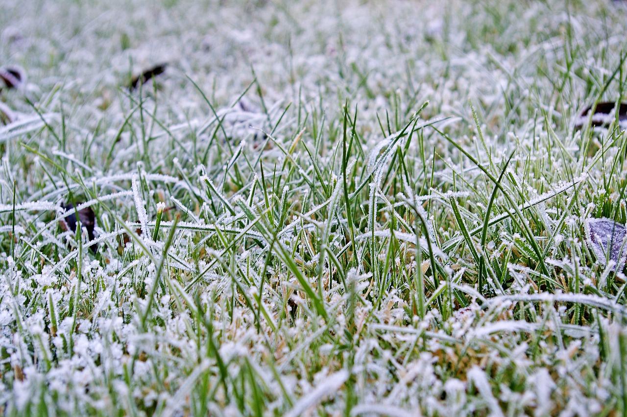winter lawn prep